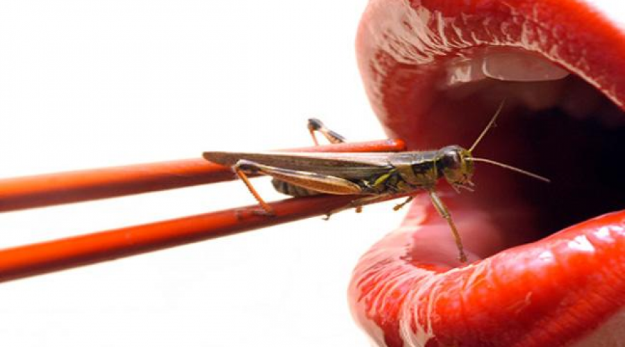 Got Crickets?  The New Protein Supplement